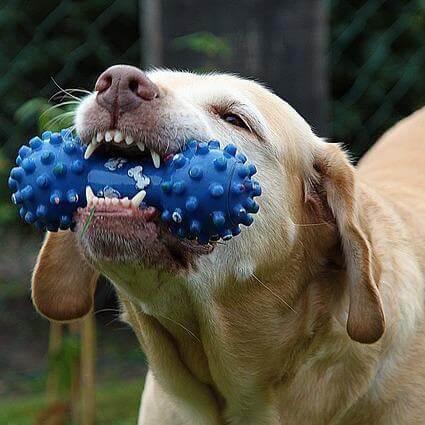 dog dentist